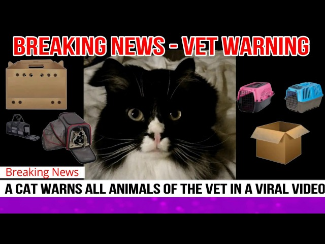 Breaking: Cat Warns All Animals of the VET in a Funny Video
