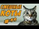 Смешные Коты Видео Кошки Приколы с Котами ДО СЛЁЗ 2017