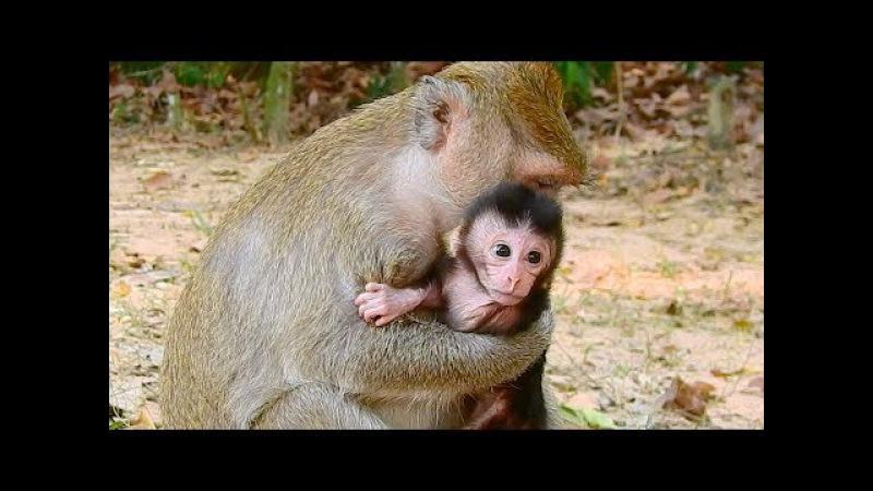 Cute Three Babies Monkeys Newborn - Baby Monkey Just Born Very Lovely