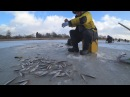 ВОТ ЭТО РЫБАЛКАНе УСПЕВАЛИ ловить на 2 удочки.Отрыв по корюшке с мега рыбаком Виктором.