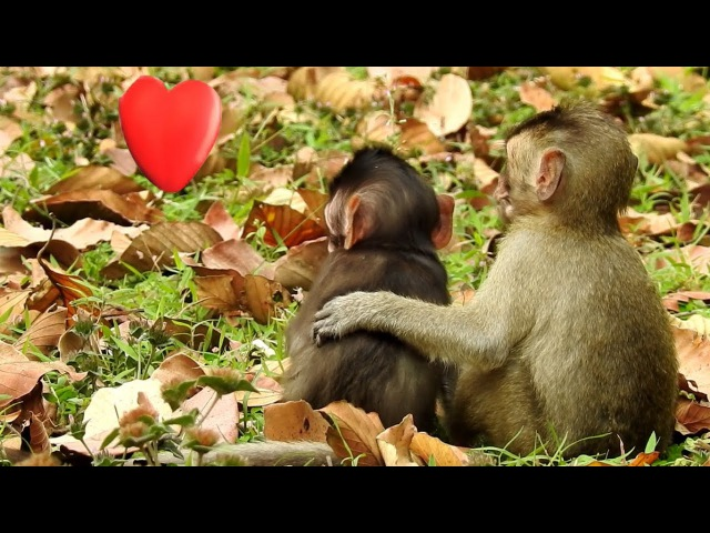 Amazing Video Compilation 2017 , Good the baby Monkey Lovely , Animal's Life - part 233