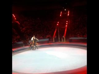 🐎🐎🐎 Я очень люблю коняшек 😍ну эта красавица👍🐎 умничка циркникулина большиемолодцы👏👍 @greatcircus ru 👏👏👏👏👏👏👏👏👏