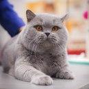 Хватит смотреть картинки! Приходи посмотреть на кошек вживую!