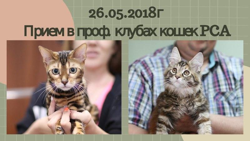 Прием в проф. клубах кошек PCA 26.05.2018г