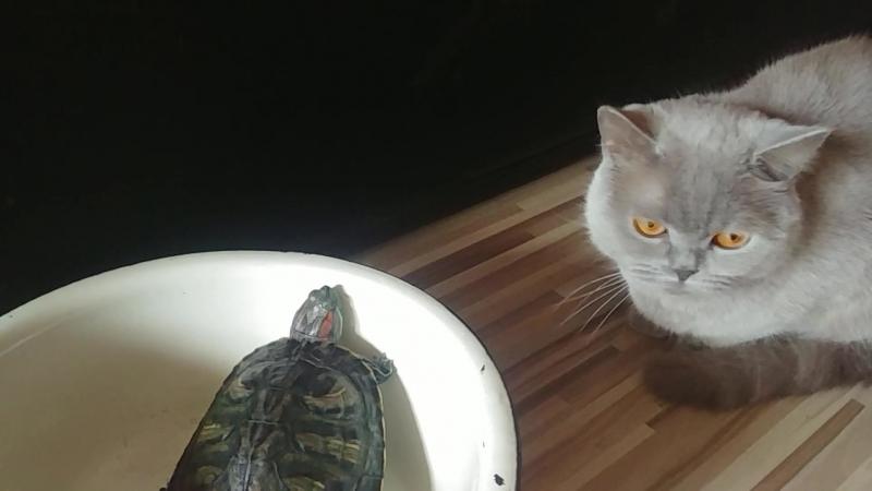 Кокос и Оливка
