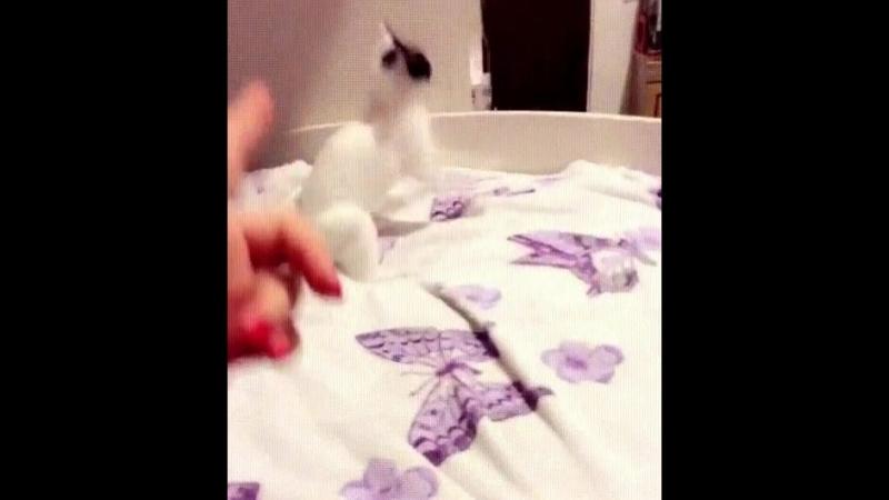 Дайте оскар этому коту