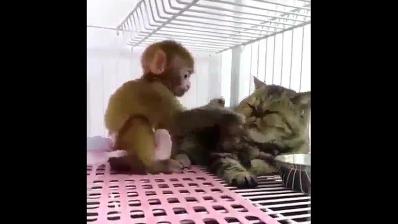 У тебя тут торчит !