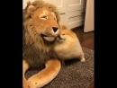 Шпиц и лев