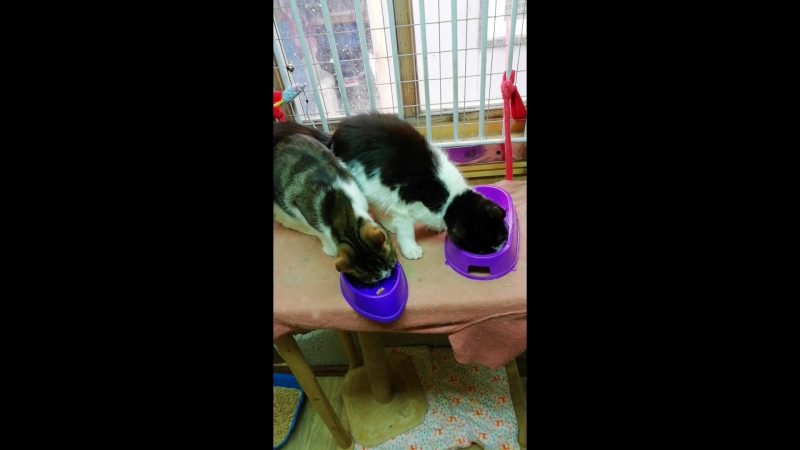 Кошки и консервы