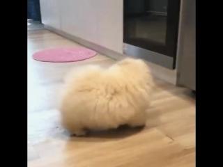 Я маленькаЯ маленькая Собачка я во все не облачко