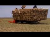 Кытайдардын оилап таппайтыны жок