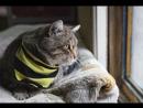Lakshmi_Cats_2017