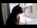 Нашлись ещё одни существа которых как и людей волнует падающий снег