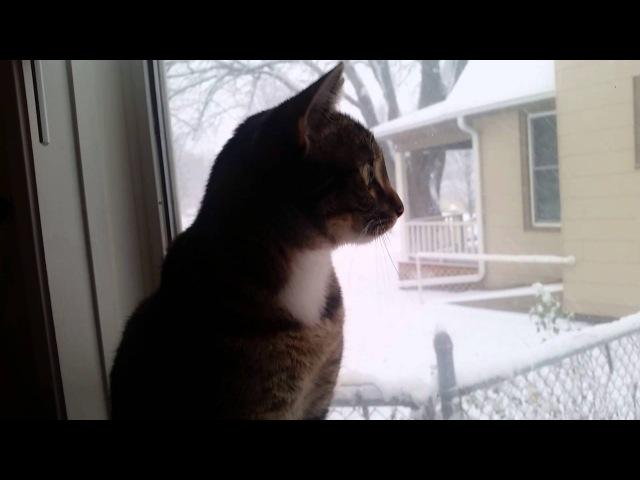 Нашлись ещё одни существа, которых, как и людей, волнует падающий снег!