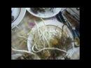 плачевный результат неправильного хранения луковиц лилии ОТ гибрида