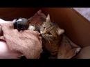 СМЕШНЫЕ СОБАКИ, ЩЕНКИ,КОТЫ,КОТЯТА. Кошка кормит щенка