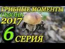 Поход за грибами 2017 / В лес за подберёзовиками / Грибы / Архивные кадры