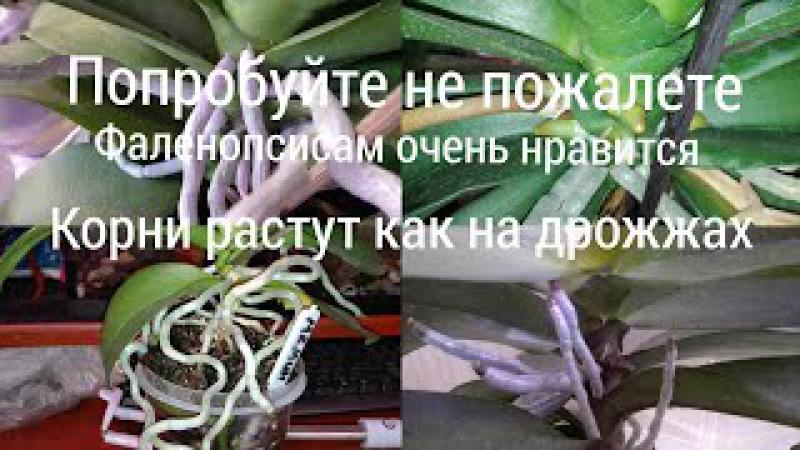 Самый лучший препарат для наращивания корней у Фаленопсисов, но только у здоровых.
