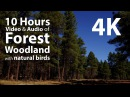 4K UHD 10 hours - Woodland Forest and birdsong audio - relaxing, meditation, nature