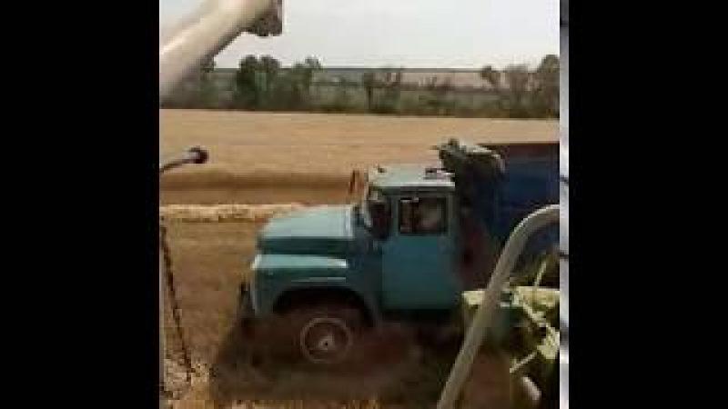 Выгрузка зернового бункера Клаас тукано 470 Зил 130