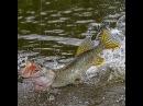 Рыбалка на поппер. Fishing on Popper