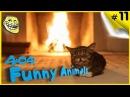 Прикольные животные - Смешная подборка видео про животных Животные