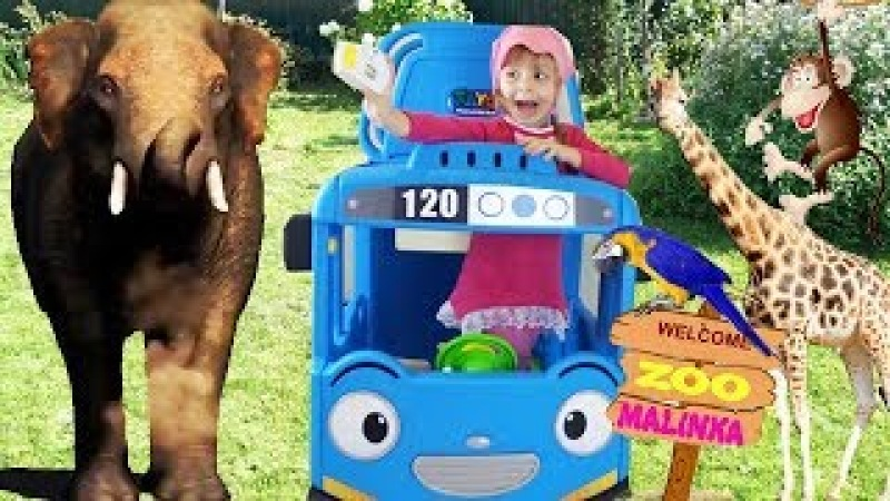 Funny Baby Lina Learn zoo animals names with Little Bus Tayo Fun Educational video