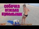 ЛУЧШИЕ ПРИКОЛЫ ФЕЙЛЫ ШУТКИ Собачка на пляже отжала у девушки купальник !😁 С...