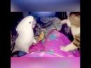 Самые веселые бои животных 😂😂