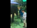 Кормление слонят