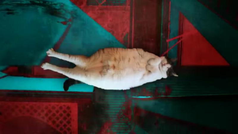 летучий кот