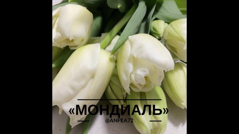 «Мондиаль» | Тюльпаны на 8 марта | Тюмень