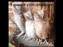 VID_20840317_035056_137.mp4