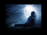 Matt Holliday Zirenz - Dark is the Moon