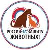 """Пикет """"Закон нужен сейчас""""   Петрозаводск"""
