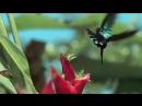 Ocen_Krasivoe_Video_(VIDEOMEG)