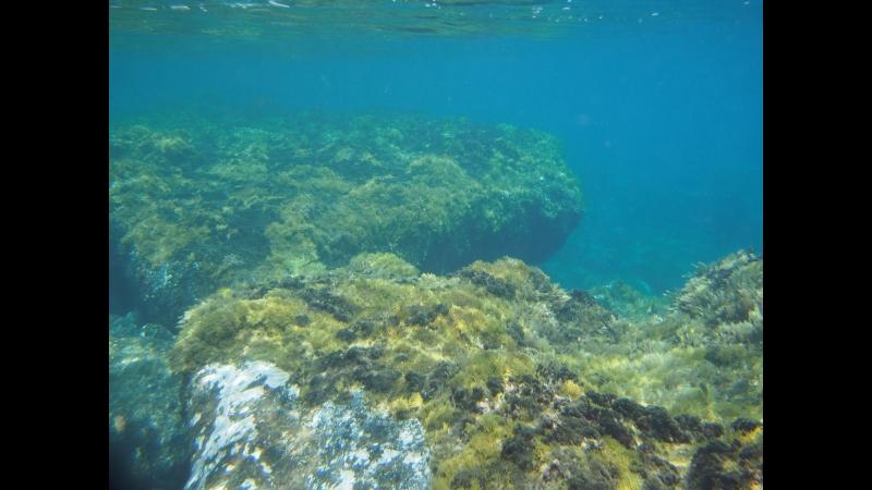 Подводный мир Ла Гомеры