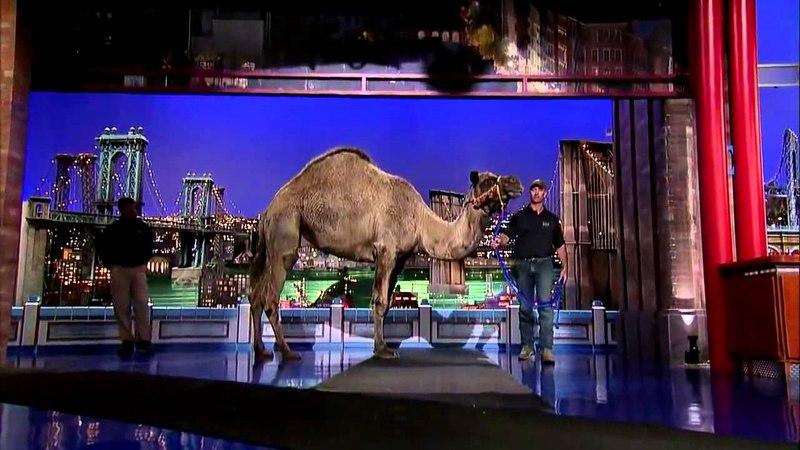 David Letterman Jungle Jack Hanna's Camel