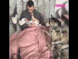 Хаски охраняют малыша во время кормления