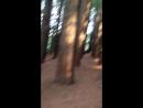 Redwood Forest East Warburton 2