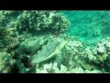 черепашки и морские лилии