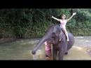 Слоненок окатил как из душа