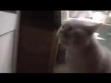 Кот просит открыть ему дверь