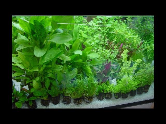 Признаки нехватки Удобрений в Аквариуме Самодельное удо для аквариумных растений