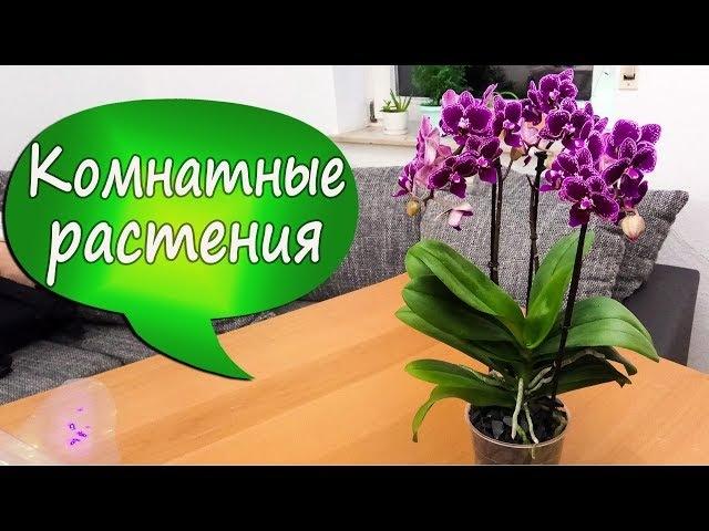 15. Пересаживаю новую орхидею в пенопласт! О системах посадки фаленопсисов. Методу 2,5 года!