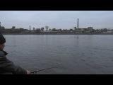 Ловим на тесто!Нева 06.10.2013 Fishing on Neva river.St.Petersburg,Rus.