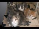 Смешно до слез про кошек Смешные приколы 2018 20 Самое классное Без монтажа