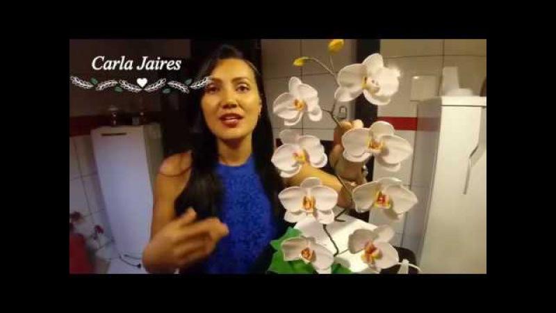 Orquídea sem frisador - Parte 1