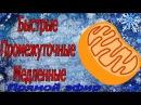 Селуянов. Митохондрии на БЫСТРЫЕ, ПРОМЕЖУТОЧНЫЕ, МЕДЛЕННЫЕ ВОЛОКНА. Новый матер