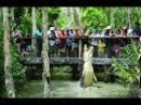 Unbelievable Moments Animals Meeting Tourist ➨ Feeding Lion , Tiger , Crocodile , Fish , Cheetah